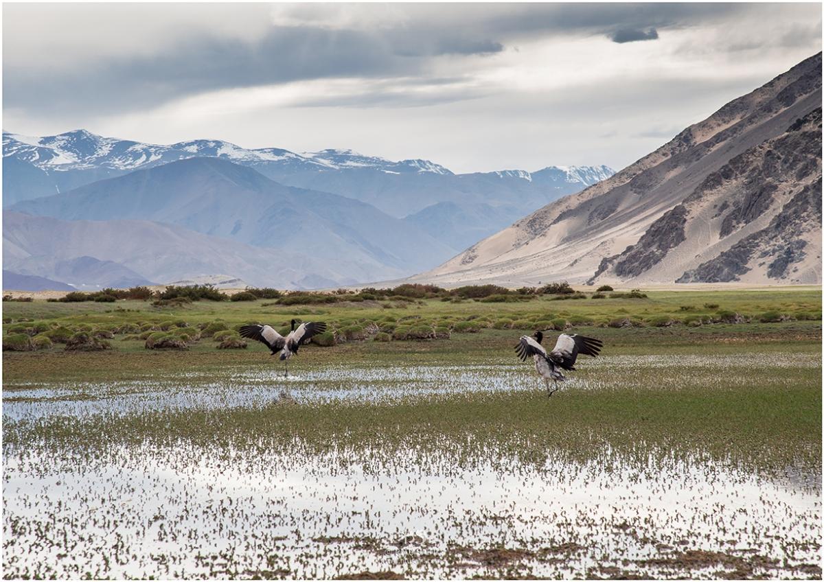 Wild Ladakh